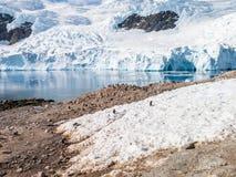 Gentoo penguins and calving glacier in Andvord Bay, Neko Harbour. On Arctowski Peninsula, Antarctica royalty free stock photos