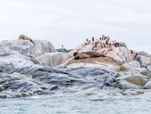 Gentoo penguins, crabeater seal and elephant seals on Petermann royalty free stock photo