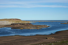 Gentoo Penguins - Falkland Islands Stock Image