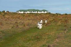 Gentoo Penguins - Falkland Islands Royalty Free Stock Photography