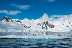 Gentoo penguins on iceberg Antarctica Stock Image