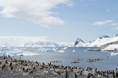 Gentoo Penguins on the nest Royalty Free Stock Photography