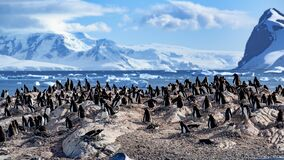 Free Gentoo Penguins - Pygoscelis Papua - On Rocks In Front Of Southern Ocean With Icebergs And Mountains At Cuverville, Antarctica Royalty Free Stock Photos - 209904418