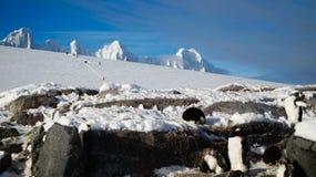 Gentoo penguins on snowy Wiencke Island in Antarctica. stock image