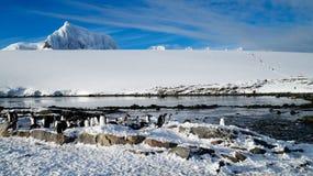 Gentoo penguins on snowy Wiencke Island in Antarctica. stock images