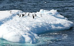 Gentoo Penguins standing on a iceberg. Melting blue ice floating in Antarctic Ocean. Antarctica Landscape Stock Photography