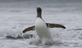 Gentoo Pinguin im Ozean Lizenzfreies Stockbild