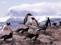 Gentoo Pinguine in Antarktik Stockbilder