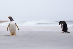 Gentoo-Pinguine auf dem Strand mit Brandung im Hintergrund Lizenzfreies Stockfoto