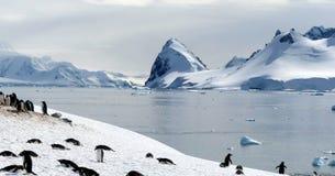 Gentoo Pinguinkolonie, Antarktik Stockfoto