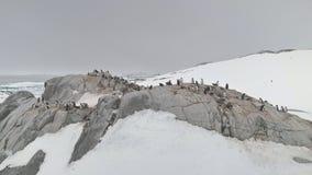 Gentoo-Pinguinkolonie auf von der Luftdraufsicht des Felsenhügels stock footage