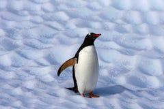 Gentoo pingvin på ett isberg Arkivfoton