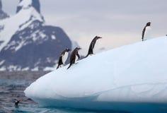Gentoo pingwiny na górze lodowa Obrazy Stock