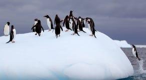 Gentoo pingwiny na górze lodowa Obraz Stock