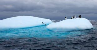 Gentoo pingwiny na górze lodowa Zdjęcia Stock