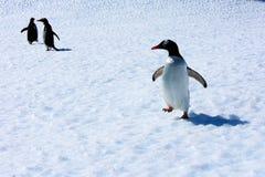 Gentoo pingwiny na górze lodowa Zdjęcia Royalty Free