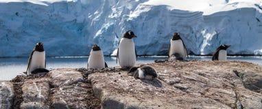 Gentoo pingwiny w Antarctica zdjęcia royalty free