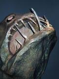 Genua Italien, mars 2011 Huvudet av en ruskig enorm fisk med stora tänder i akvariet av de museumAcquario dina Genova royaltyfri foto