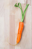 Genuine carrot Stock Image