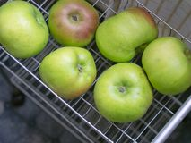 Genuine fresh picked farm grown Bramley Apples for cooking, in kitchen rack. Imperfect, natural, organic fruit. Authentic fresh picked farm grown Bramley Apples royalty free stock photos