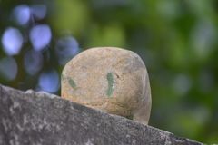 Genuine jade is a natural lump. That has not yet been cut. Dark green, rare and stock image