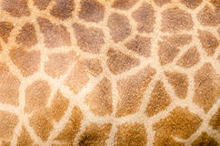 Genuine leather skin. Stock Photography