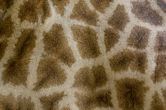Genuine leather skin of giraffe. Royalty Free Stock Photos