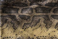 Genuine leather snake and scales the view from the top stock photo