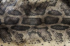 Genuine leather snake and scales the view from the top stock images