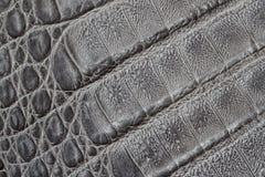 Genuine leather texture background, crocodile skin print, matte surface, fashion pattern. Diagonal arrangement. Concept Stock Images