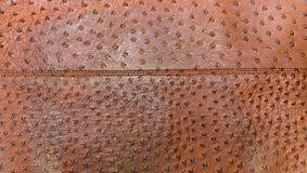 Genuine leather textured of ostrich skin Stock Images