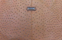 Genuine leather textured of ostrich skin Royalty Free Stock Photo