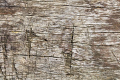 Genuine scratched vintage wood for rough texture and rustic template. Genuine old scratched vintage wood plank for rough texture, aged board and rustic template Stock Photos