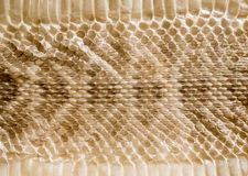 Genuine snake skin leather for texture and background. Seamless reptile pattern Royalty Free Stock Image