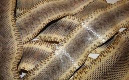 Genuine snake skin Stock Photography
