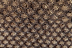 Genuine snakeskin. Leather texture background. Closeup photo. Royalty Free Stock Images