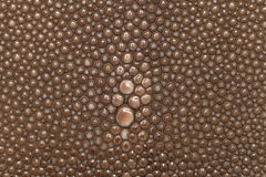 Genuine stingray skin closeup. Super macro. Genuine brown stingray skin closeup. Super macro Leather texture background stock photos