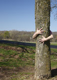 Genuine Tree Hugger Royalty Free Stock Image