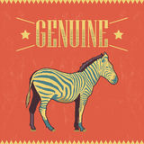 Genuine Zebra vector label - card Stock Image