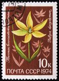 Genus Tulipa, tulip flower, the family Liliaceae, circa 1974 Stock Image