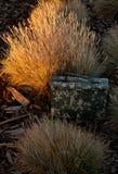 Geocache bij Zonsondergang Royalty-vrije Stock Foto's
