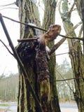 geocache caché dans la forêt Photographie stock