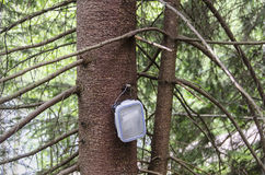 Geocache container hanging on spruce tree royalty free stock image