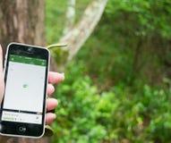 Geocache del hallazgo con el teléfono móvil app Foto de archivo libre de regalías