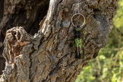 Geocaching-Behälter versteckt im Baum stockbilder