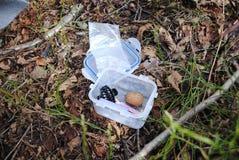 Geocatch-ask i skog fotografering för bildbyråer