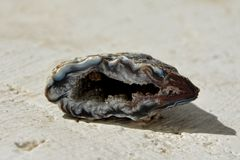 Geode agate stone Stock Photography