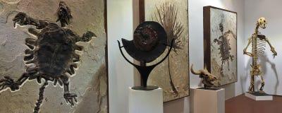 GeoDecor kopalin & skamielin galeria Fotografia Royalty Free
