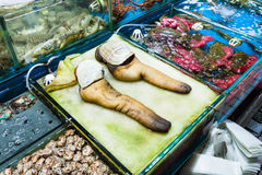Geoduck clams in fish market in Guangzhou city. Travel to China - geoduck clams on Huangsha Aquatic Product Trading Market in Guangzhou city in spring season Stock Photo