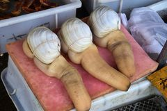 Geoduck clams panopea abrupta is a species of very large edible saltwater clam. Geoduck clams panopea abrupta in the street market stock image